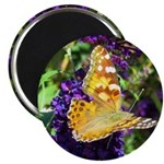 Peacock Butterfly on Purple sq Magnets