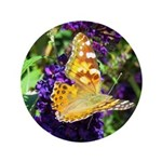 Peacock Butterfly on Purple sq 3.5