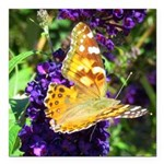 Peacock Butterfly on Purple sq Square Car Magnet 3