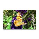 Peacock Butterfly on Purple sq Rectangle Car Magne