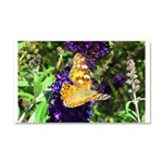 Peacock Butterfly on Purple sq Car Magnet 20 x 12