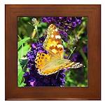 Peacock Butterfly on Purple sq Framed Tile
