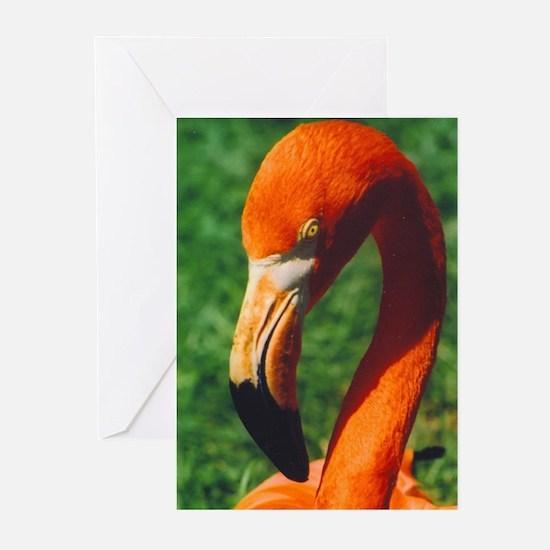 camara flamingo2 Greeting Cards (Pk of 10)