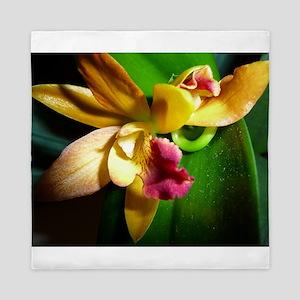Phalaenopsis Queen Duvet