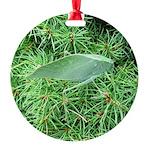 Tree Hopper on Pine Ornament