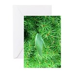 Tree Hopper on Pine Greeting Cards
