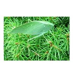 Tree Hopper on Pine Postcards (Package of 8)