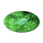 Tree Hopper on Pine Wall Decal