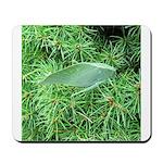 Tree Hopper on Pine Mousepad