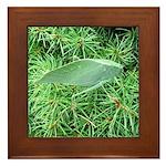 Tree Hopper on Pine Framed Tile