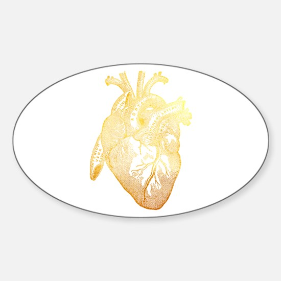 Anatomical Heart - Gold Decal