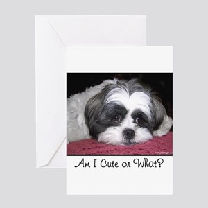 Cute Shih Tzu Dog Greeting Cards