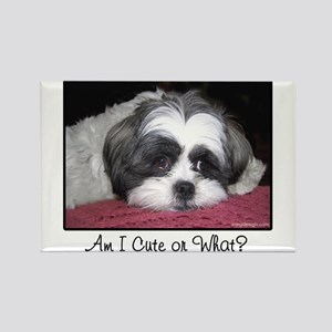 Cute Shih Tzu Dog Magnets