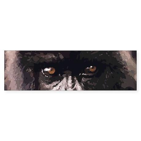 Gorilla Eyes Bumper Sticker