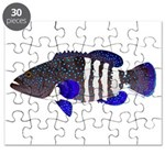 Peacock Grouper Roi Puzzle