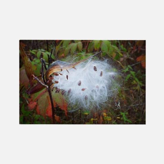 Milkweed Pod Burst Magnets