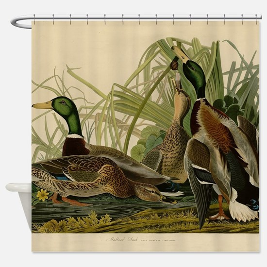 Mallard duck Audubon Bird Vintage Print Shower Cur