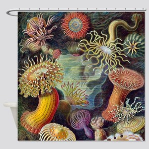 Vintage sea anemones illustration Shower Curtain