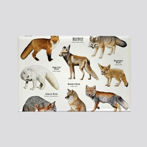 Foxes of the World Rectangle Magnet