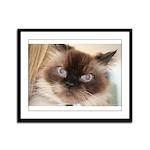 Himalayan Cat Framed Panel Print
