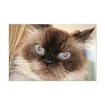 Himalayan Cat Mini Poster Print