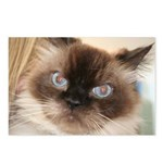 Himalayan Cat Postcards (Package of 8)
