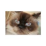 Himalayan Cat Rectangle Magnet (10 pack)
