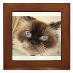 Himalayan Cat Framed Tile