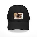 Himalayan Cat Black Cap