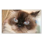 Himalayan Cat Rectangle Sticker