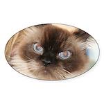 Himalayan Cat Oval Sticker