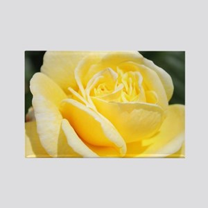 beautiful yellow rose flower Magnets