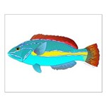 Belted Wrasse Posters