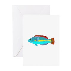 Belted Wrasse Greeting Cards