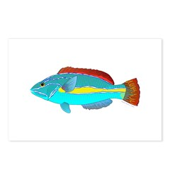 Belted Wrasse Postcards (Package of 8)