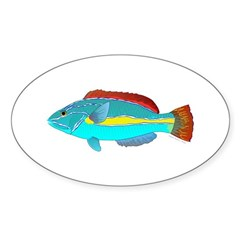 Belted Wrasse Decal