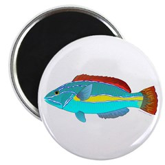 Belted Wrasse Magnets