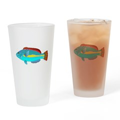Belted Wrasse c Drinking Glass