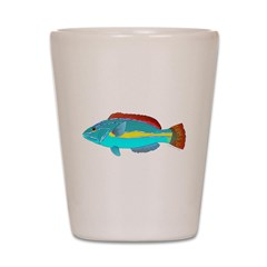 Belted Wrasse c Shot Glass