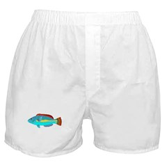 Belted Wrasse c Boxer Shorts