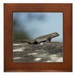 Western Fence Lizard Framed Tile