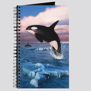 Killer Whales In The Arctic Ocean Journal