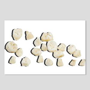 Baby Teeth Postcards (Package of 8)