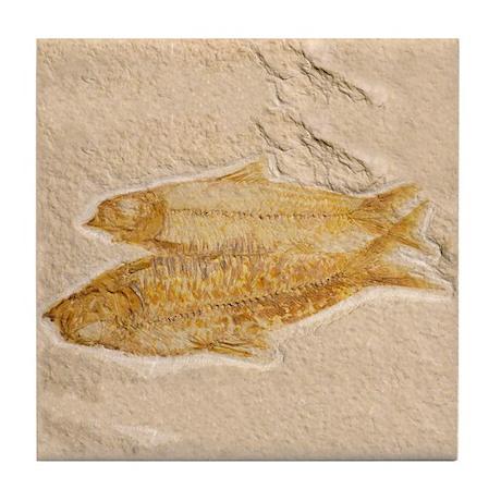 Fossil Image Art Tile Coaster 2 Fish