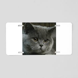 Blue British Shorthair cat Aluminum License Plate