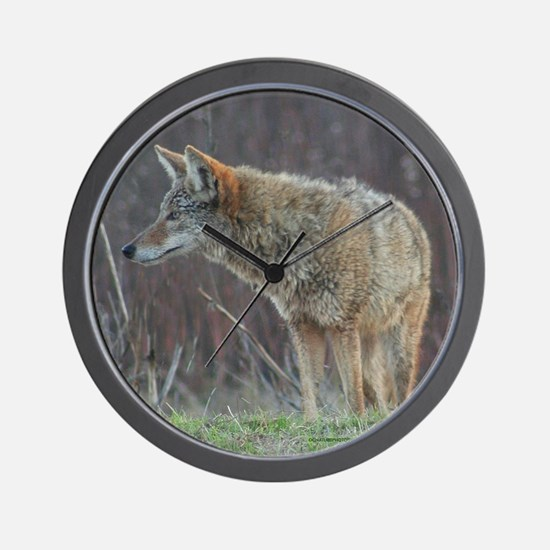 Wild Coyote Wall Clock