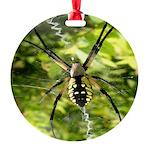 Garden Spider Awaits sq Ornament