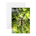 Garden Spider Awaits sq Greeting Cards