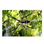 Garden Spider Awaits sq Postcards (Package of 8)