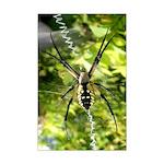 Garden Spider Awaits sq Posters